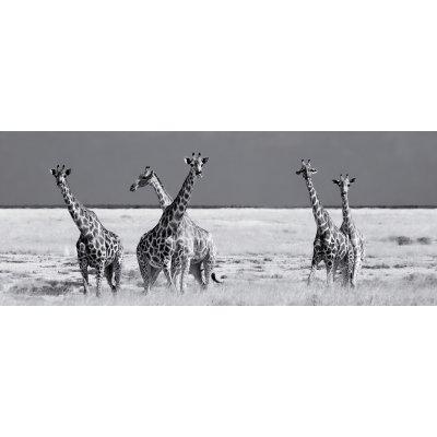 Glaskader giraffen (50x125)