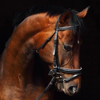 Glaskader paard (20x20)