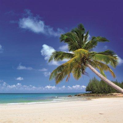 Glaskader palmboom (30x30)
